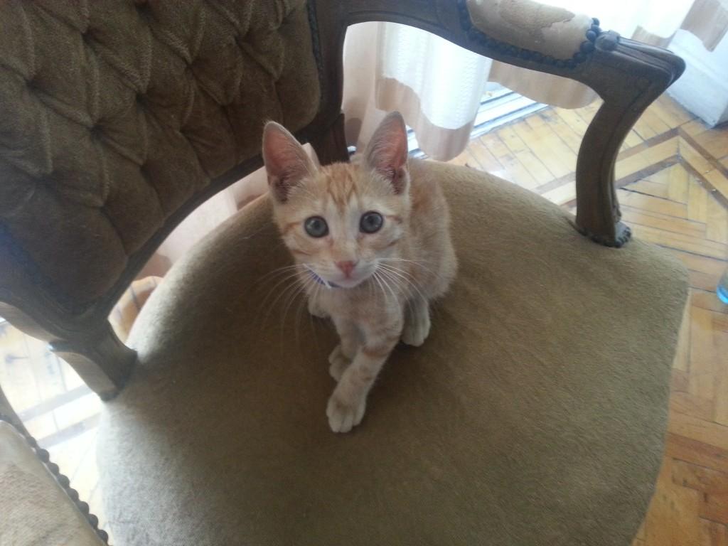 16-Sweet little kitten (we love our MishMish)