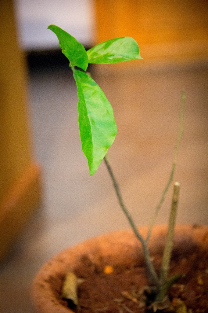 01.22- We are pruned but in the grace of God can still grow